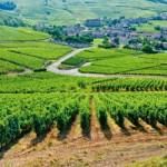 Paysages des climats de Bourgogne