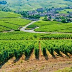 Landscapes of Burgundy wine climates